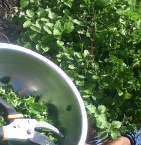 LIBRARY LIVE COMMUNITY HERB GARDEN APRIL 21 2015